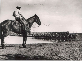 Author ridin point on Slewfoot circa 1956