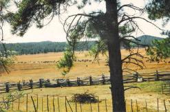 Rogers Lake Herd