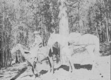 Slewfoot at BuckRidge Cabin 1