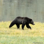 slewfoot-blackbear